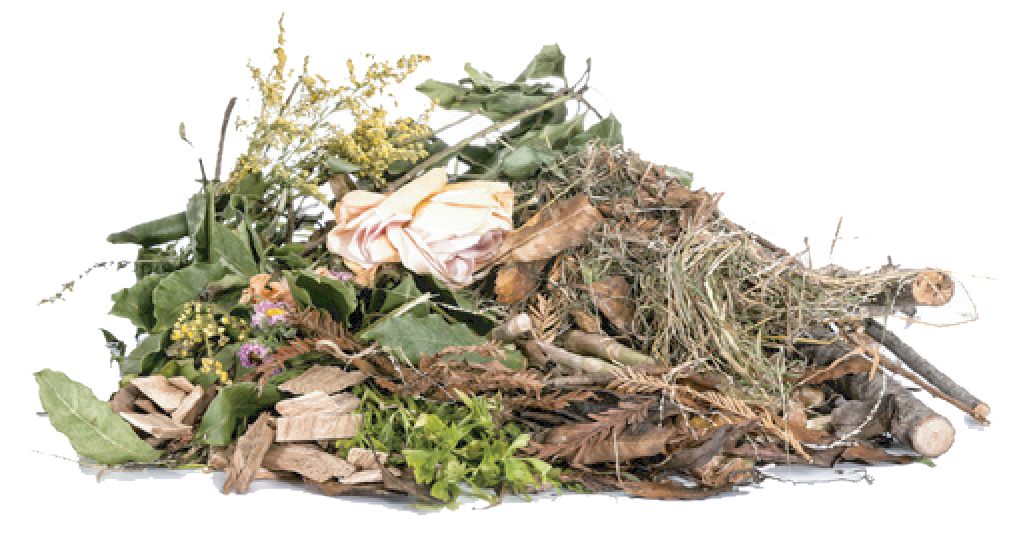 yard waste removal in New Orleans